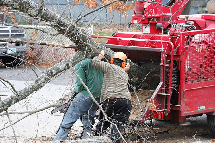 Tree Removal Service | Sugar Hollow Farms